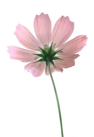 Blumen und Blüten